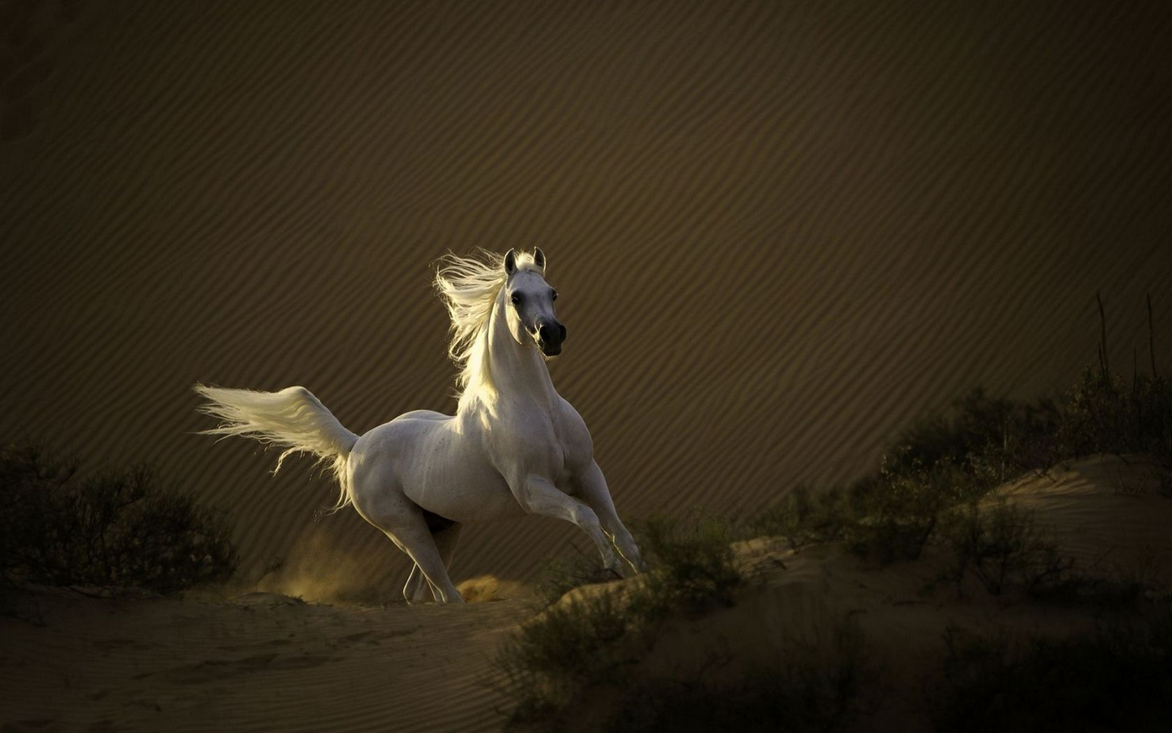 Good Wallpaper Horse Desert - e2f7f2cd471a54e3f33fbd624f9f959a  Pictures_91981.jpg