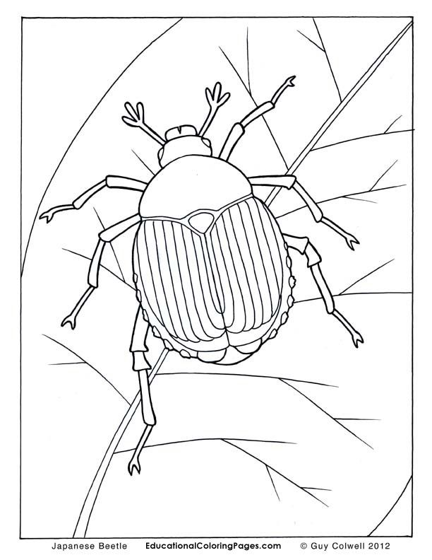 beetle coloring pages insects