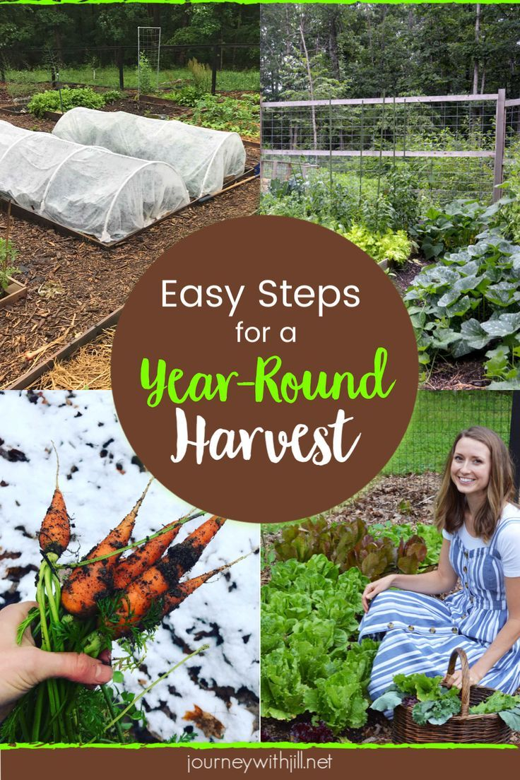 Plan a YearRound Harvest for Your Garden is part of Gardening for beginners, Gardening tips, Garden pests, Garden planning, Organic vegetable garden, Garden harvest - If you want to extend your garden season and eventually work up to a yearround harvest, these easytoimplement tips will get you started!