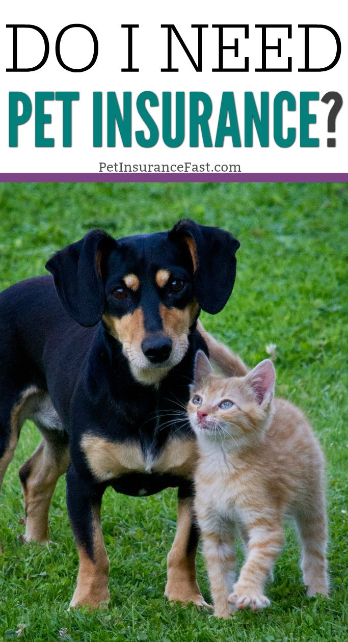 Do I Need Pet Insurance? Yes! Here's Why. - Pet Insurance ...