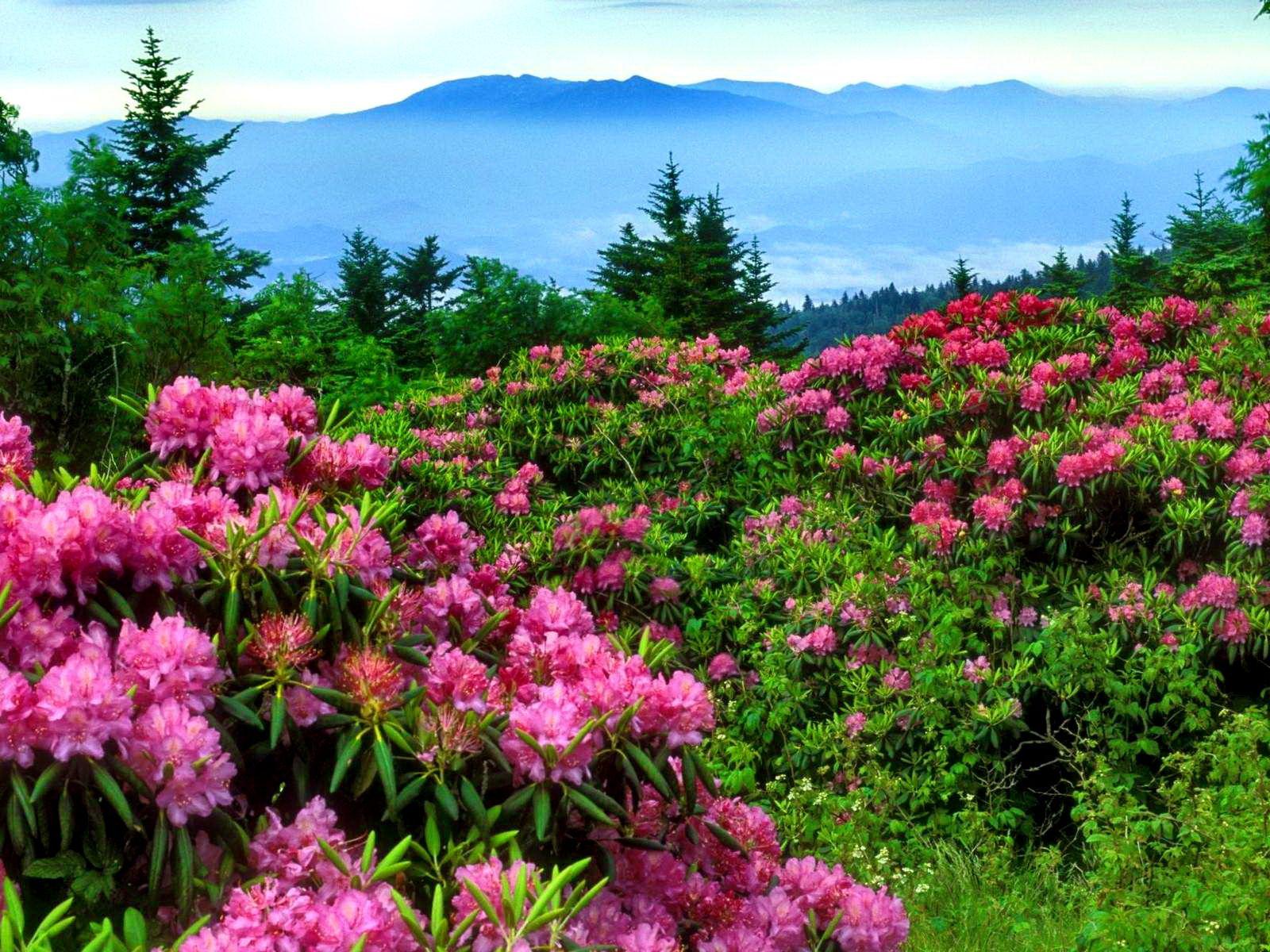 Beautiful Wallpaper Mountain Flower - e2f9f34140e2b6971dcdaa6b35cf24bd  Perfect Image Reference_85632.jpg