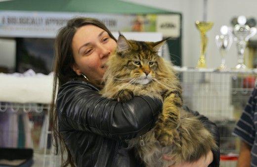 Ποτέ πια ο γάτος μου δεν θα μου φαίνεται μεγάλος (ή βαρύς) - φωτ.: Γ. Πλανάκης/ LIFO