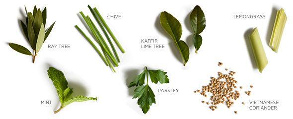 Easy to grow herbs indoors