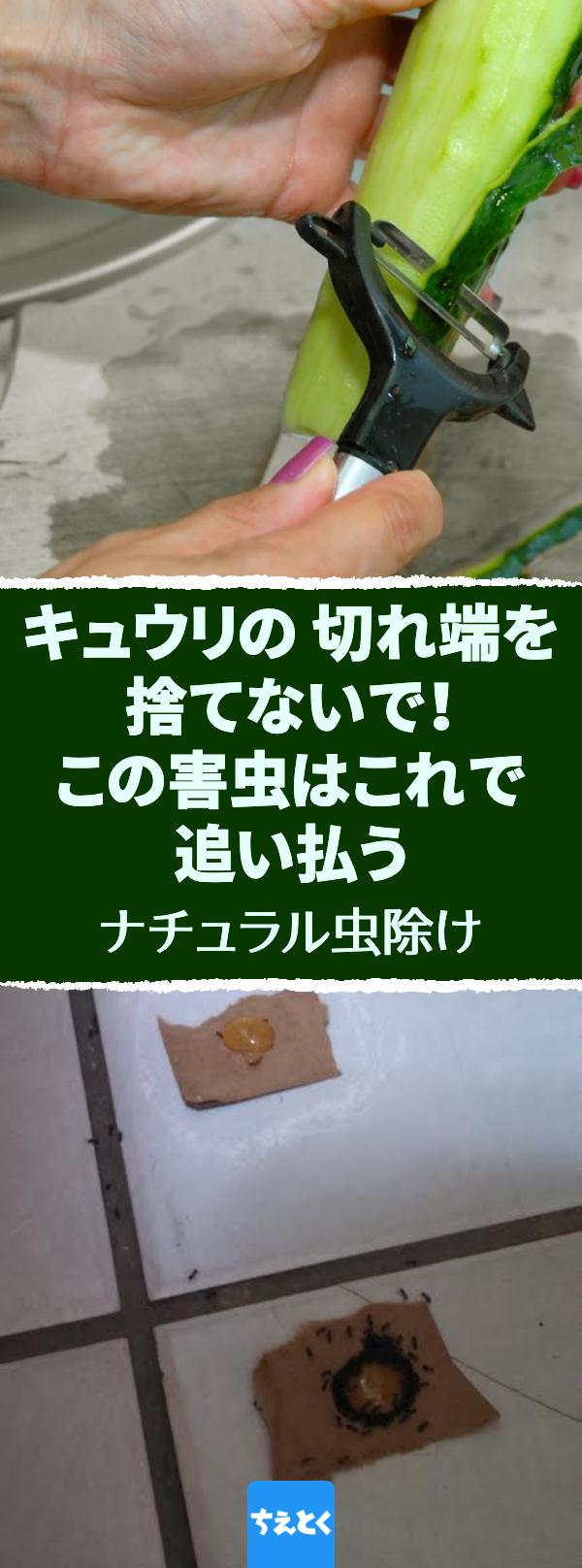 キュウリの切れ端を捨てないで この害虫はこれで追い払うことができる ナチュラル虫除け丨10の自然な方法でアリの侵入を防ぐ アリ 害虫 駆除 除去 きゅうり レモン 重曹 虫除け 虫除け 植物 虫除け 害虫