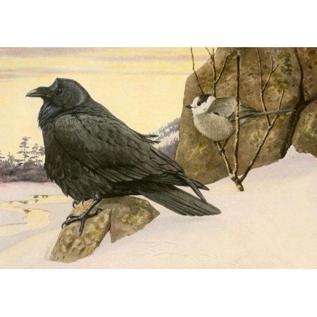 Birds of America 1923 Raven & Canada Jay Canvas Art - LA Fuertes (18 x 24)