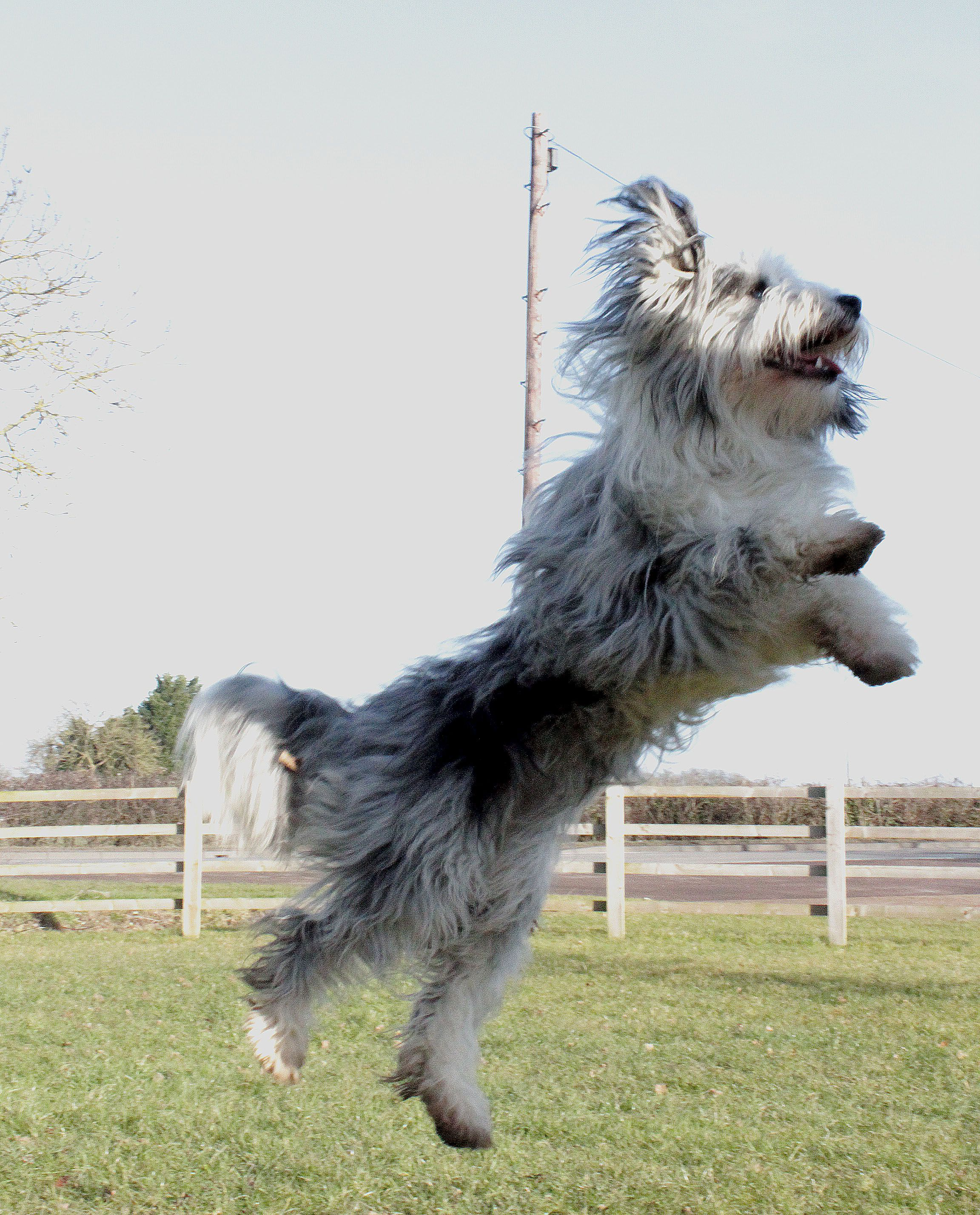 Dog Jumping Photography By Tayla Butler Dogs In Action Dogs