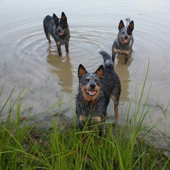My kids enjoying a day at the lake!