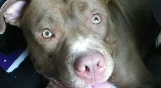 City Of Savannah Ga Citizens Against Breed Specific Legislation