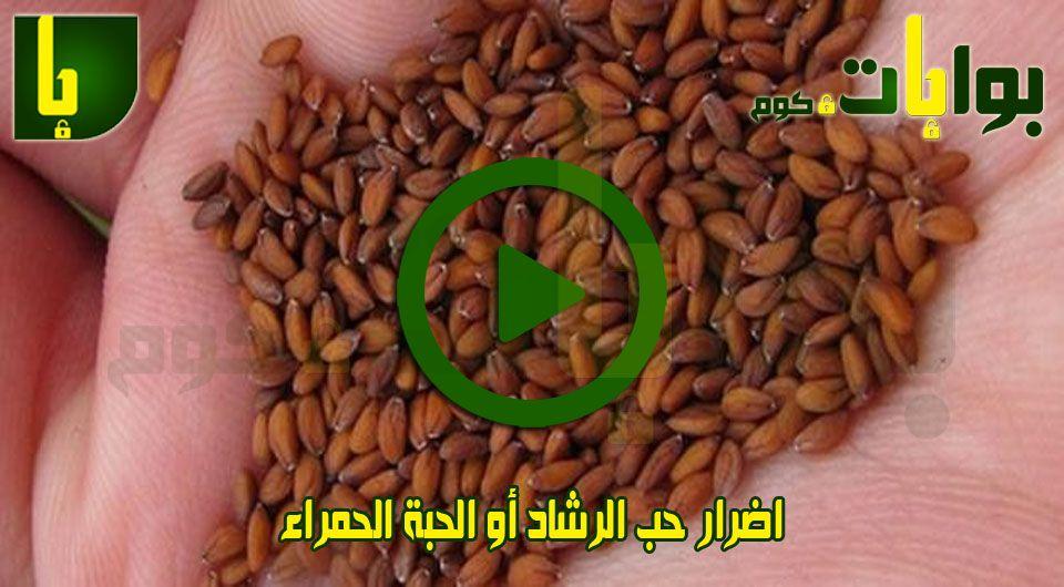 اضرار حب الرشاد أو الحبة الحمراء Graphic Design Logo Red Beans Logo Design