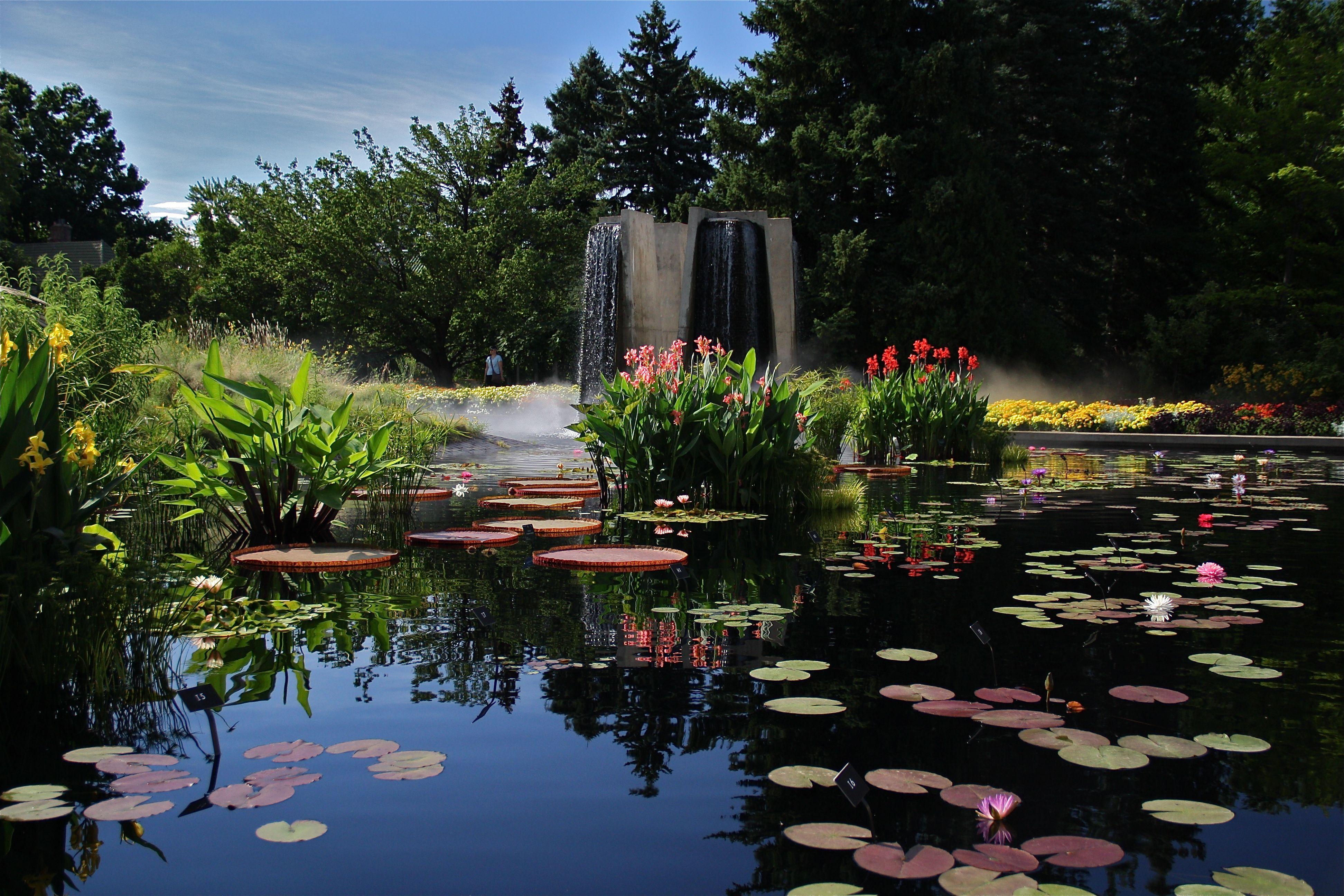 Denver Botanic Gardens | IWGS Competition Pond At Denver Botanic Gardens