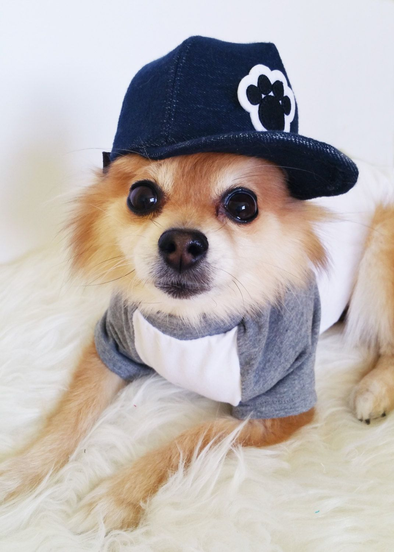 2957adbd436 Dog T-shirt + Snapback Set