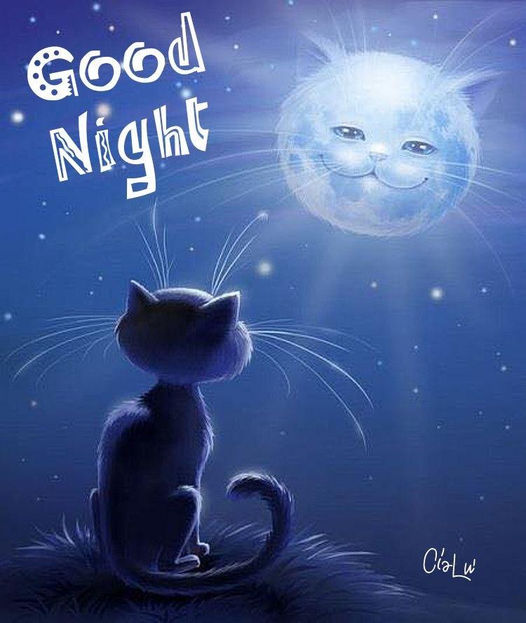 Картинки красивые спокойной ночи с кошками