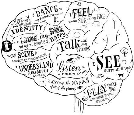 Best way to study neuroanatomy! =) - Re-pinned by @PediaStaff – Please Visit http://ht.ly/63sNt for all our pediatric therapy pins