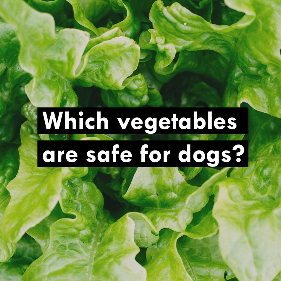 Which Vegetables Are Safe For Dogs Vegetables Nutrition Diy Plant Stand