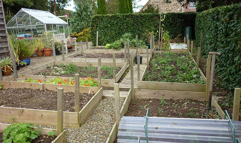 It's hot, but fall veggie gardening is right around the ...