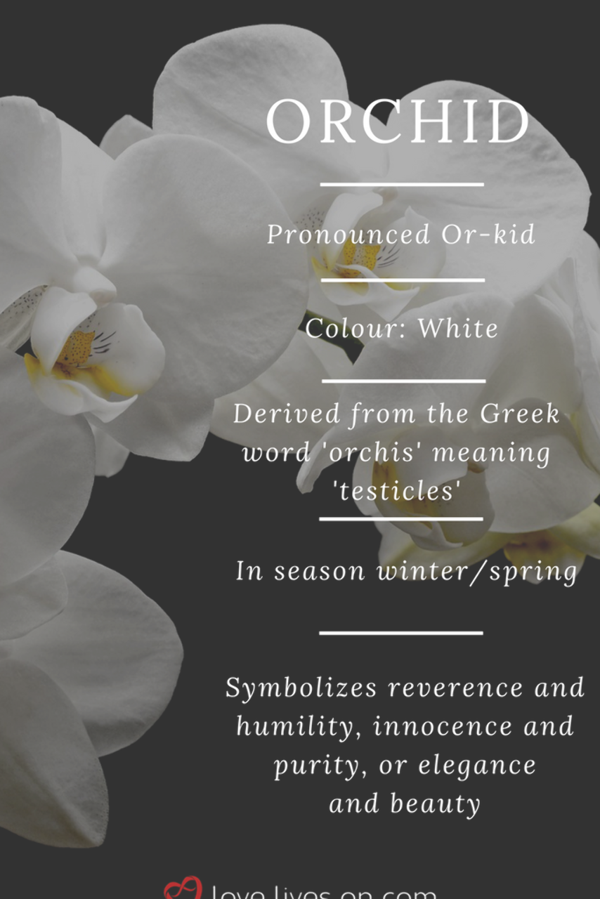 White Orchid Meaning White Orchids Symbolize Reverence Humility Innocence Humility Innocence Meaning In 2020 Orchid Meaning Flower Meanings Funeral Flowers