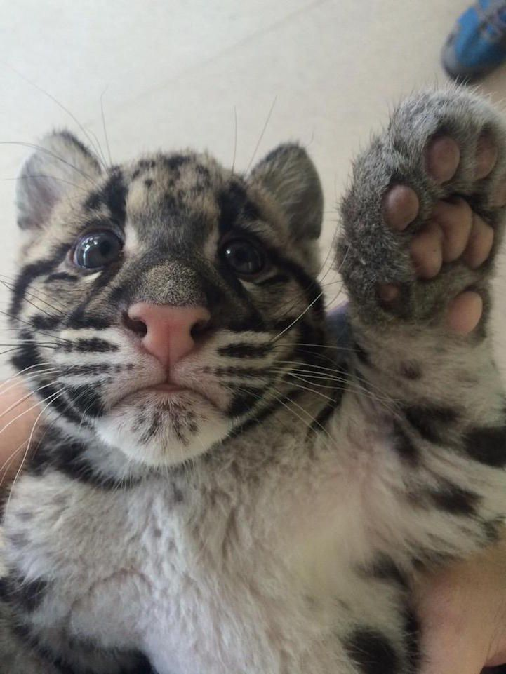Image of: Cute Baby Animals Scientists Had cuteoff Competition On Twitter To Crown The Cutest Animal On Earth See All 23 Of Our Favorite Contenders Pinterest Scientists Had cuteoff Competition On Twitter To Crown The Cutest