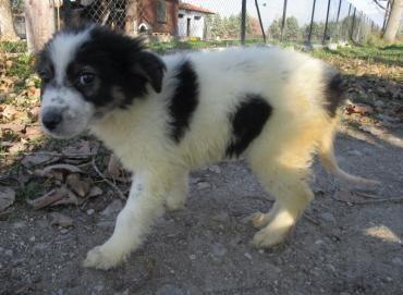 Hund Welpe Mischling Mischling Hundin 4 Monate Griechenland Hunde Welpen Hunde Mischlingshunde