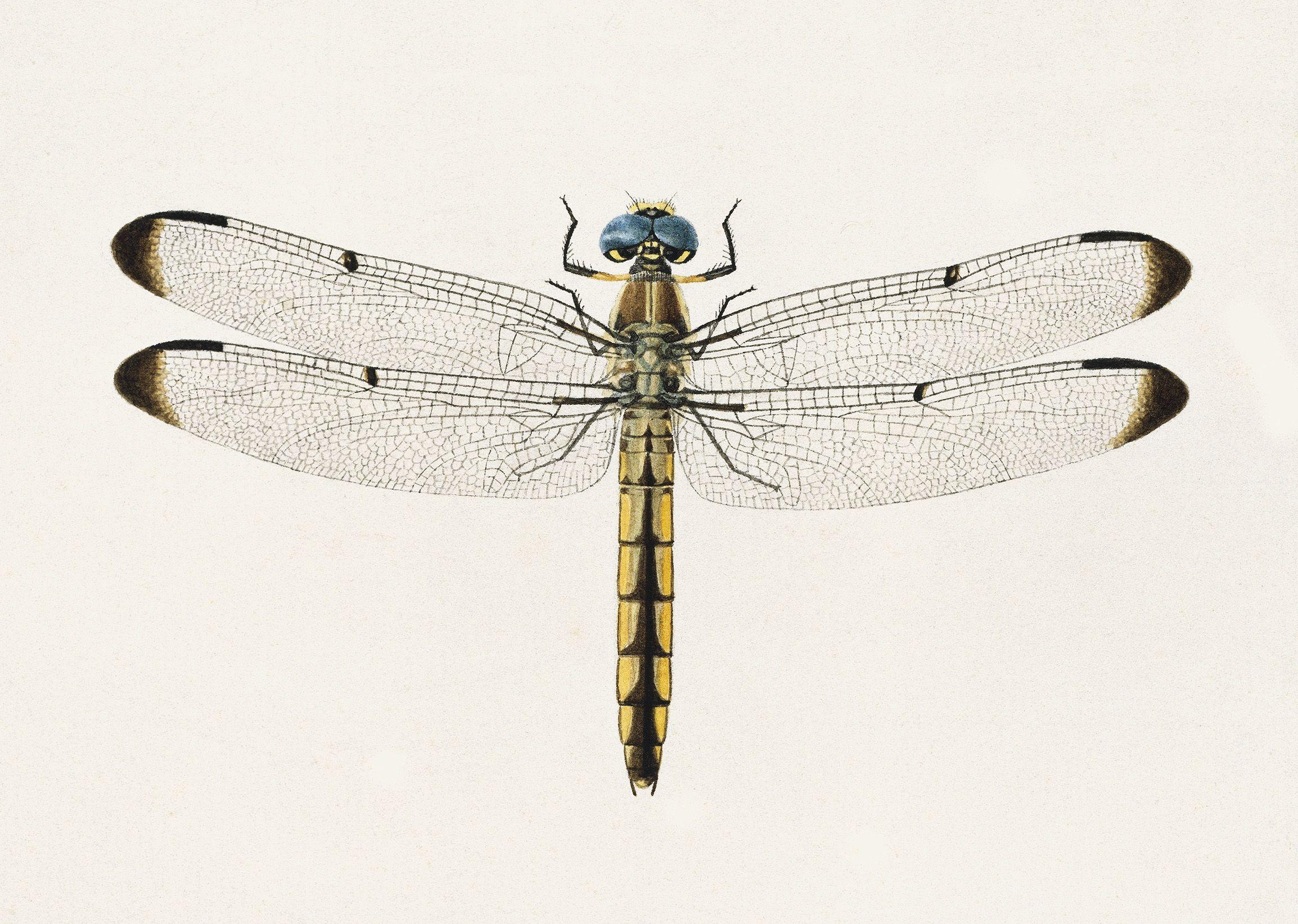 metal dragonfly wall art uk