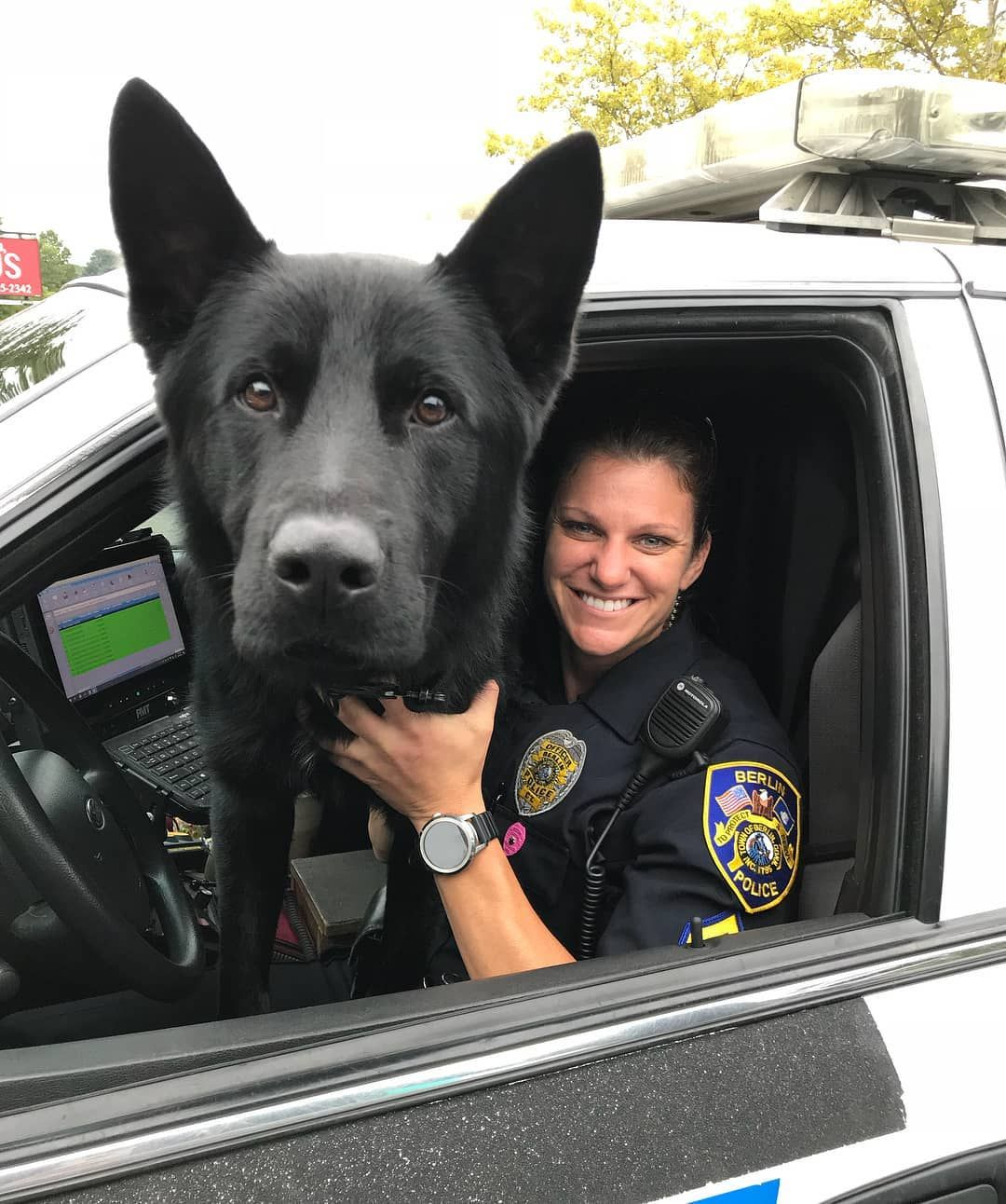 You Called For A Police Officer Can I Assist You K9 Casneruse Regram Via Gsdstagram Germanshepherd Working Dogs German Shepherd Dogs Military Dogs