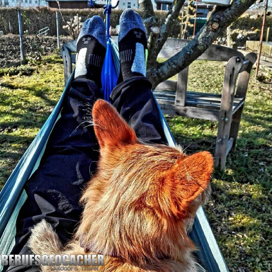 #hammock #hammocklife #hammocktime #hängematte #new #amazing #garden #garten #chilling #summer #sommer #berufsgeocacher #outdoor #outdoors #tree #trees #dogs #dogsofinstagram #mydog #dog #mylife #pinky #hund #meinhund by @berufsgeocacher.de