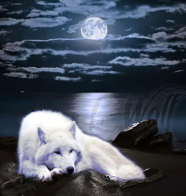 корпусов картинки белых волков ночью каталоге представлены вытяжки
