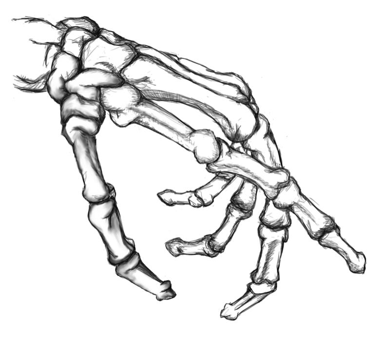 SKELETON HAND Google Search Skeleton hands drawing