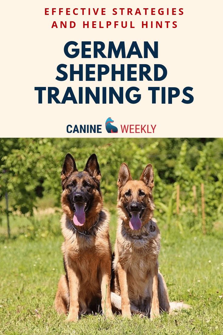 7 Basic German Shepherd Training Tips Basic And Helpful Hints In 2020 German Shepherd Training German Shepherd Dogs German Shepherd