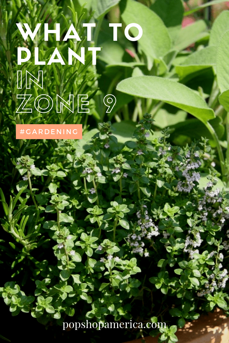 What To Plant In Zone 9 This Spring Garden Pests Florida