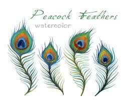 Image result for feather clip art