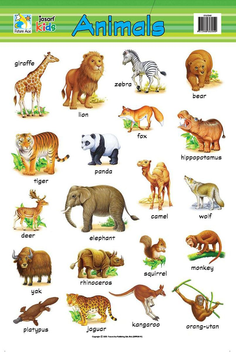 Pin by shafi on Animals | Learn english, Learning english ...