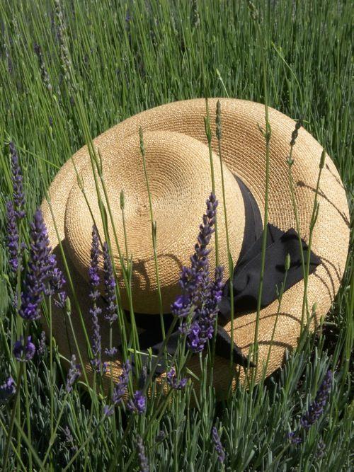 Hat in the green field....