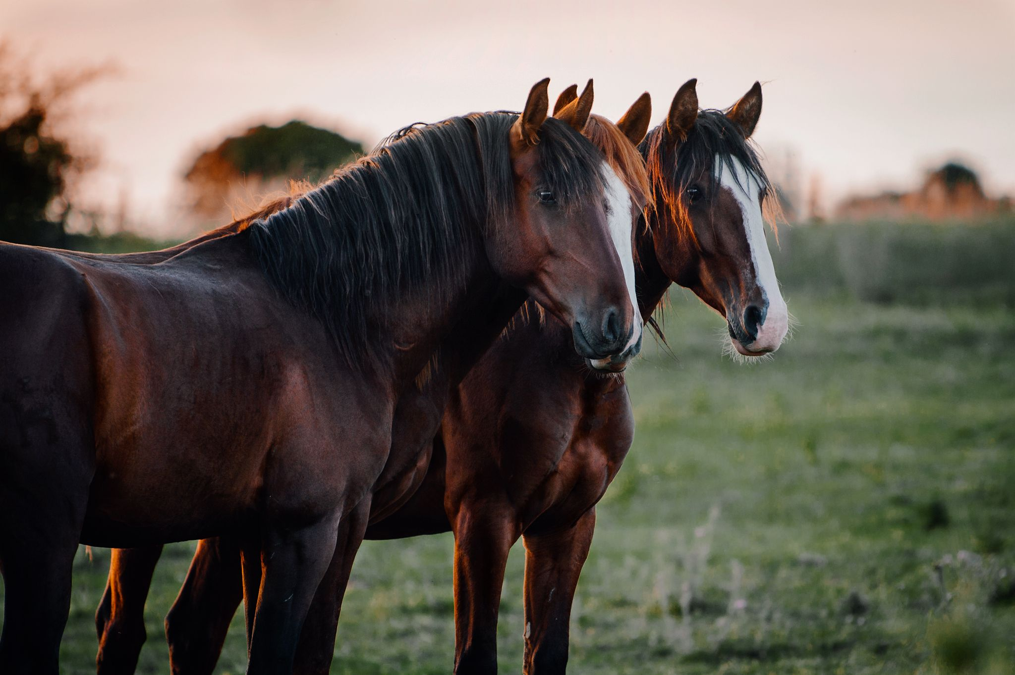 Fotos Pferde In Der Natur I Pferde Pferde Wallpaper Pferde Fotografie