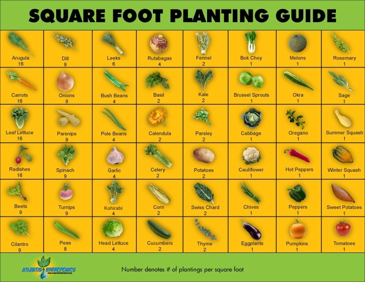 Square Foot Planting Guide Gardens Vegetable garden and Charts