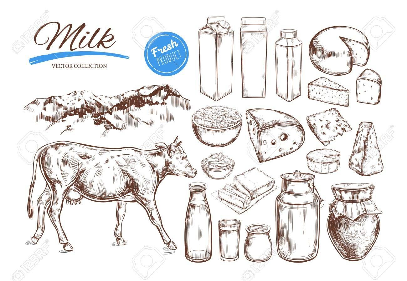 Dairy products vector collection. Cow, milk products, cheese , butter, sour cream, curd, yogurt. Farm foods. Farm landscape with cow. Hand drawn illustration. Isolated objects on white ,