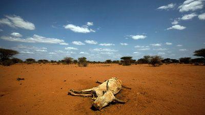 The Food Shortage in Somalia
