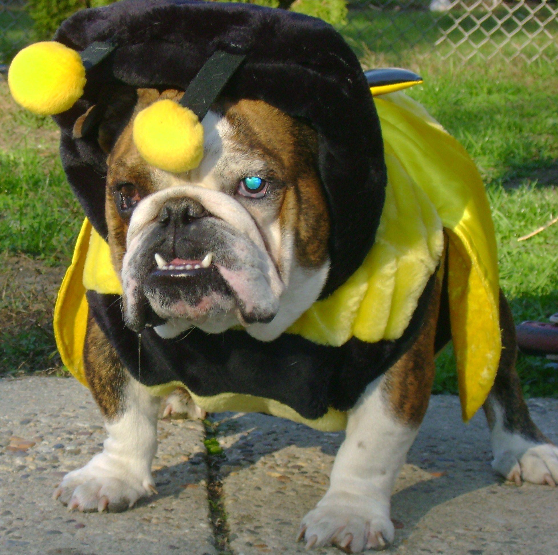We always knew he was secretly a Yellow Jacket fan