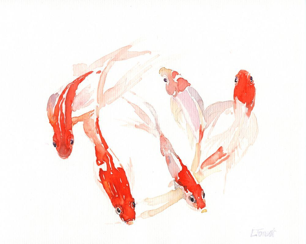 Koi watercolor painting by eva forest paper size 8x10 by for Koi carp artwork