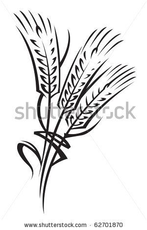 monochrome illustration of ears of wheat by alexkava via