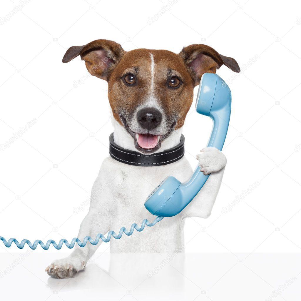 Dog on the phone talking Stock Photo , Affiliate,