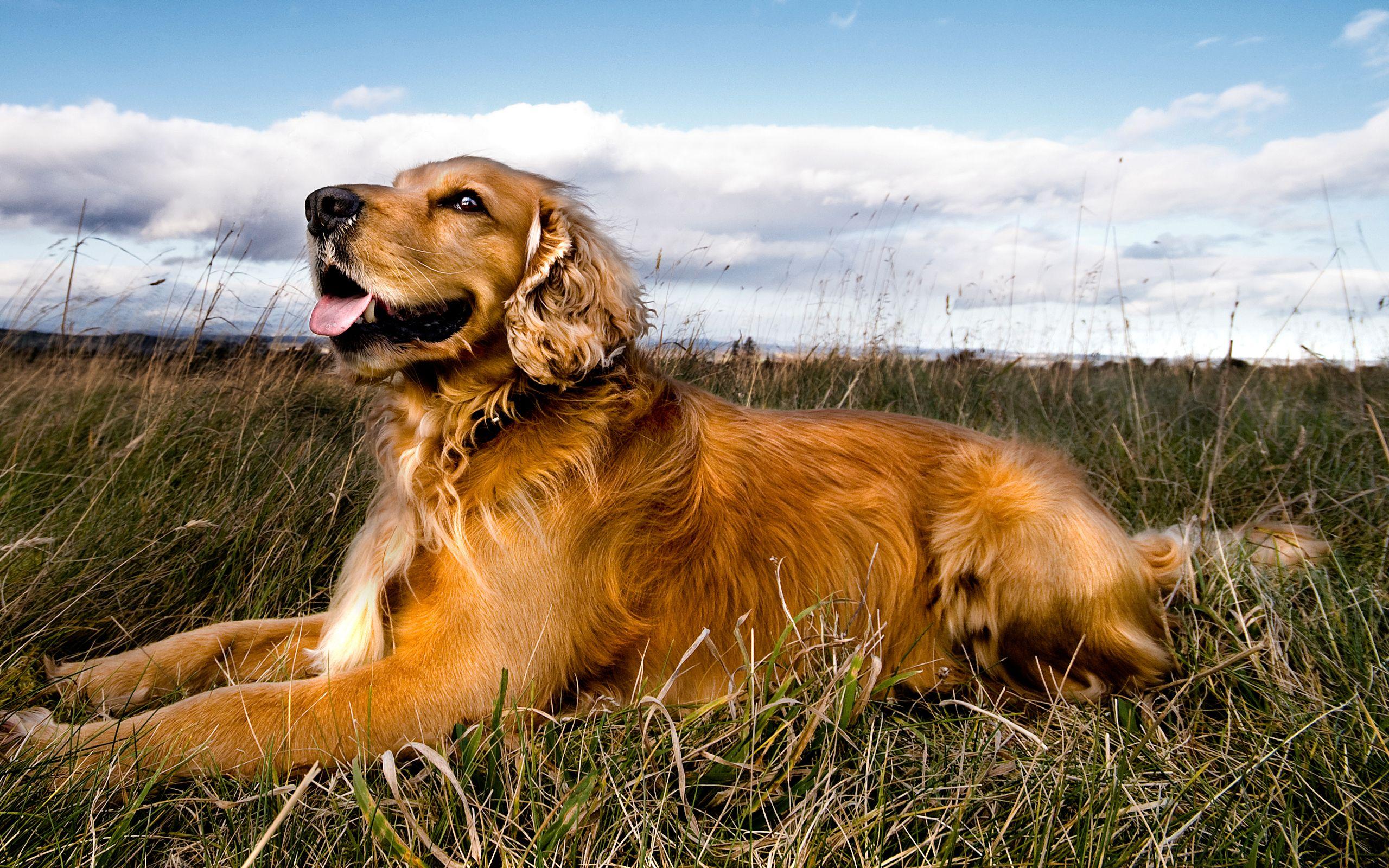 Картинка картинка собаки