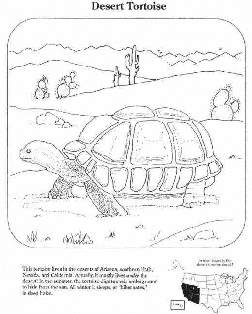 Free Desert Coloring Pages And Sheets And Things About The Desert