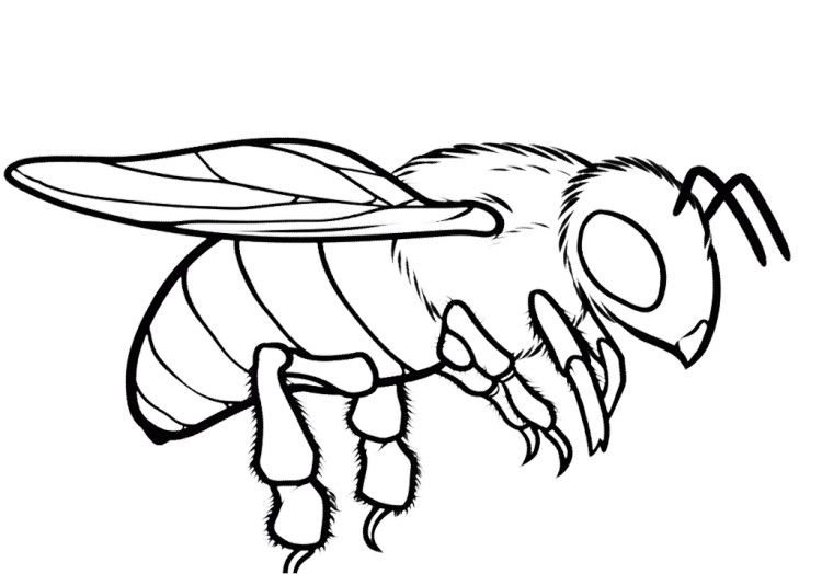 honey bee coloring pages - photo #15
