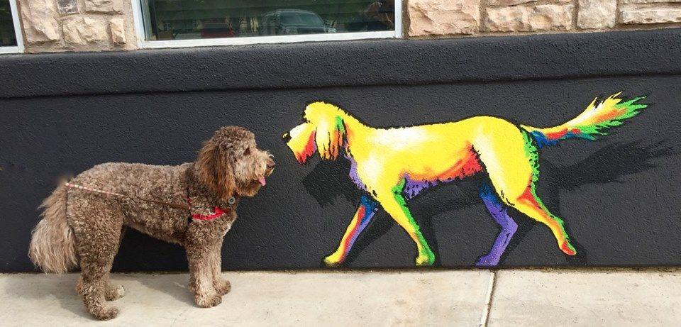 67 Dog Friendly Restaurant Patios in Tucson Dog friends