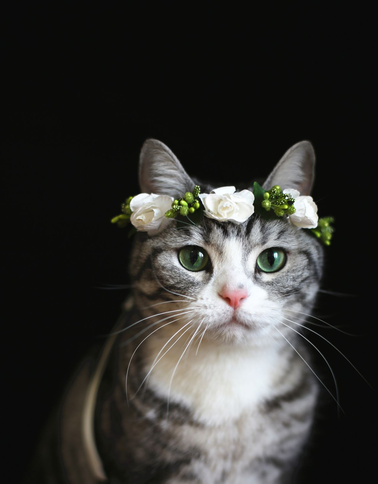 Looks Cuter In Flower Crown Cute Cats And Kittens Pinterest