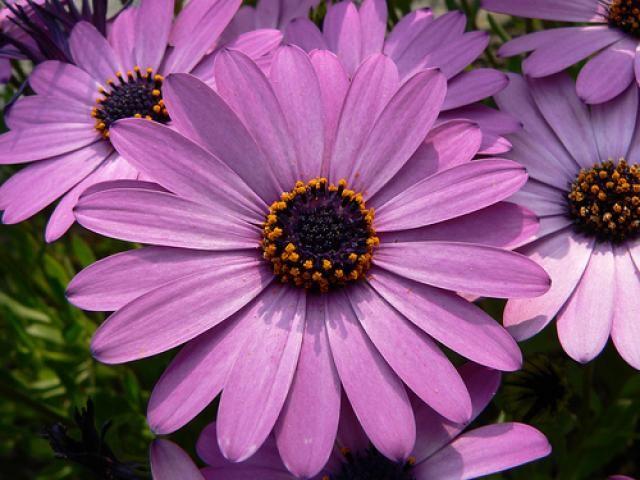 Diferentes Tipos De Flores Y Sus Nombres 3 Nombres Pinterest