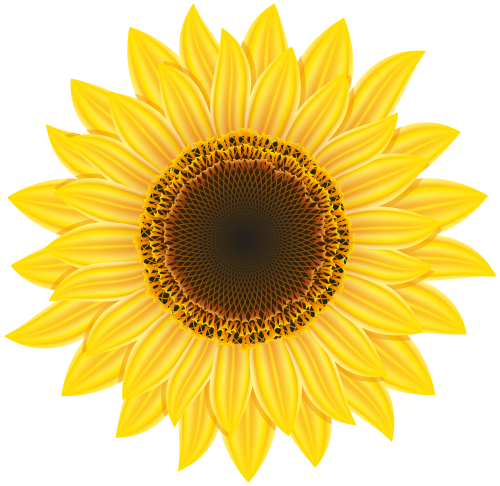 Sunflower Png Clipart The Best Png Clipart Sunflower Clipart Sunflower Png Sunflower Images