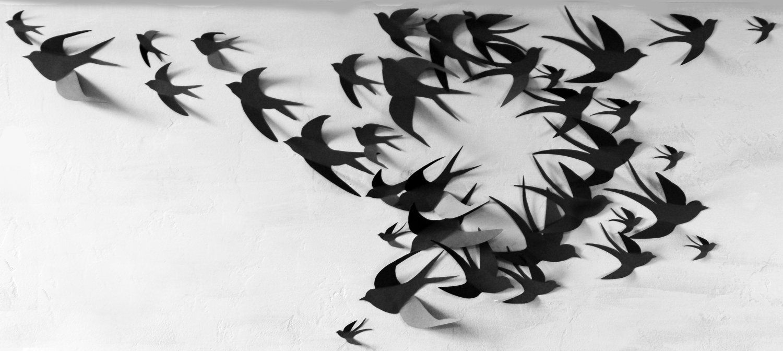 50 3D Bird Wall Art Circle Burst