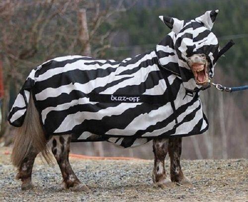 Bucas Buzz Off Full Neck Pony Zebra Fly Rug Print With Combo