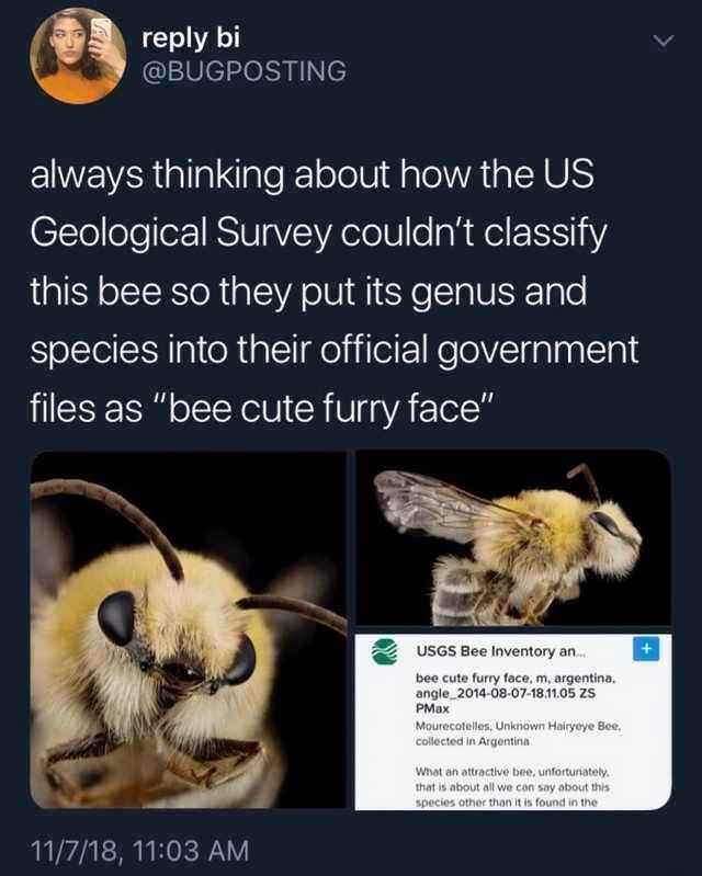 Bees. Wholesome. Cute funny animals, Funny animals, Cute